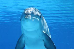 Delfin też człowiek? O związkach syndromu poaborcyjnego z prawami zwierząt